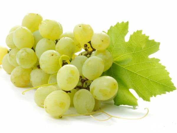 Juicy Grapes are Healthy!