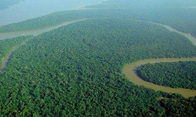 Brazilian police investigate murder of a environmentalist