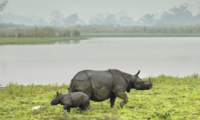 Floods create new Kaziranga ecosystem