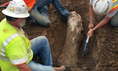 Fossils from ice age discovered