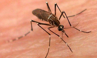 Some myths and facts about Dengue fever!