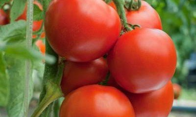Unknown health benefits of Tomatoes!