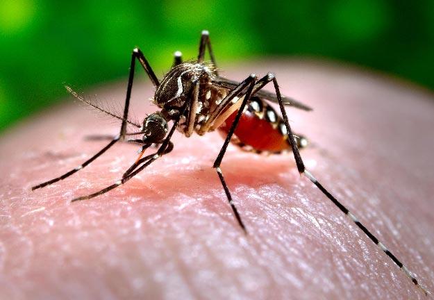 140703-mosquito