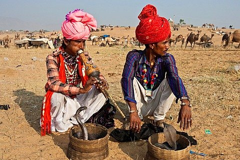 Snake Charmers, Pushkar Festival, Pushkar, Rajasthan, India