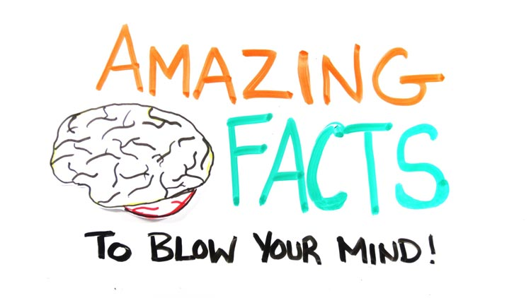 Brain Facts that will surprise you
