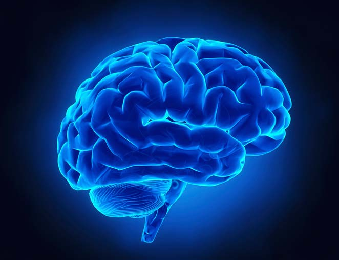 Here is how brain responds to trauma?