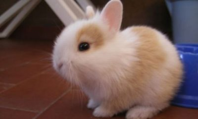 Here is why you should own a bunny as your pet