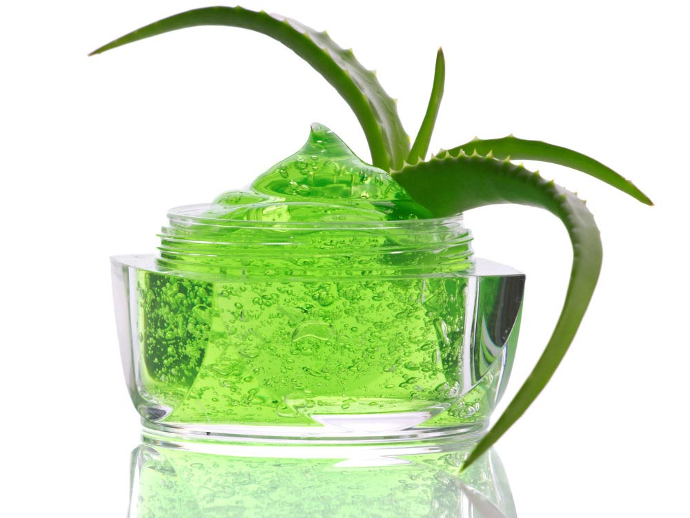 Health secrets of Aloe Vera: How to reap its benefits?
