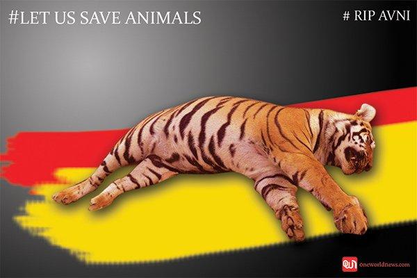 Tigress Avni