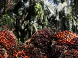 palm oil import