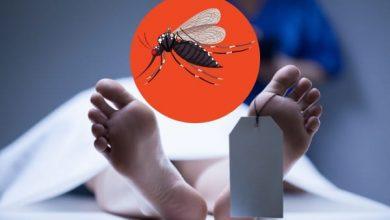Dengue cases in Delhi